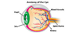 Joseph Eye Hospital Normal growth of blood vessels